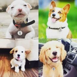 Chapa identificativa para perros y gatos